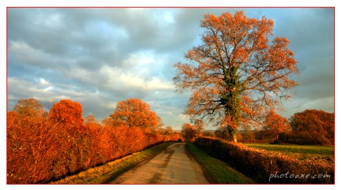autum_road